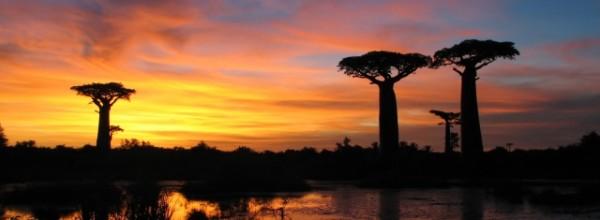 Coucher de soleil et baobabs - Madagascar