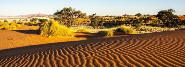 Namibie - désert