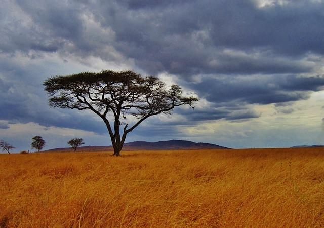 afrique-tanzanie